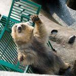 誕生日に大きいクマのぬいぐるみネットで注文したら想像と違う大きいクマのきた