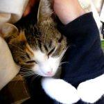 「行かニャいで!」飼い主の腕にしっかと抱きつく猫さん