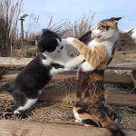 「猫の爪切りで暴れるのを防ぐマスク」をした猫の無常感がすごいw