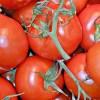 レンタル屋で「アタックオブキラートマト」を探してて「カルト」にも「あ行」にもないなーと思ったら…
