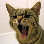 まるでプロレス技を仕掛けているかのような猫の表情が凄いwww