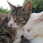 ネコが3匹、日の当たるところに集まっておしくらまんじゅうしてた