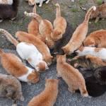 煮干しを食うのが下手な猫wwwwwwwwwwww