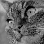 ネコがフリーズしました。再起動してください🐱
