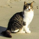 カニを見て盛り上がってた猫、カニそっちのけで揉め始める🦀