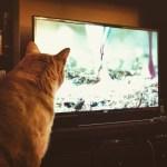 「どうなってんの!?」「成長期だな!」TVのウラに現れた超胴長な猫が話題にw