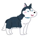 なでるのをやめた途端笑顔が消えるハスキー犬w