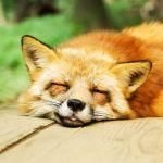 ガチで青ざめる…w「飼い主の心臓に悪いペットの寝相」写真まとめ