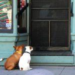 きっとこのドアの向こうには何か良いものがあるんだと思っている犬。