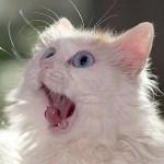 絞ったライムの匂いを嗅いだ猫の顔wwwwwww