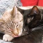 猫の顔が猫の腹に吸い込まれたッ!😹