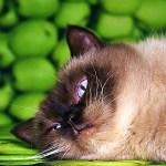 うちの猫、「彼氏に振られた時の姉」の真似が超上手いwww