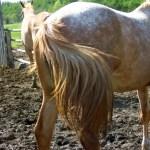 知らなかった…「馬のシッポ」の内側がこんな事になっていたなんて!