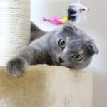 「やばいやばいw」猫の体重を支え続けたキャットタワー、もうギリギリ😹