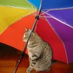 「玄関で傘干してたら…!!  可愛すぎかー!😍」 →猫傘写真祭りに発展w