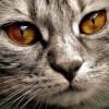 先日YouTuberデビューしたキティちゃんの「目」に映ってはいけないものが映っていると話題にw