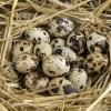 これはパニック。家にあった大量のウズラの卵がこの暑さで…😱