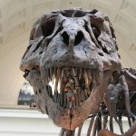 """福島で展示されている恐竜の化石を見ていたら…採集者が""""あのリーダー""""だったww"""