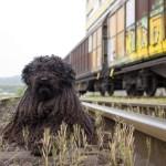 何この楽園…ひたちなか海浜鉄道による「わんわん列車」が素敵すぎる🐶