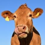 「牛が深さ4mの井戸に落ちた!」→救出方法が賢すぎるwww(中国)
