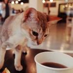 コーヒーの粉を誤って床にこぼしたら猫がやってきて…😾