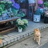 「長年連れ添った夫婦のような背中」京都で黄昏れる野良猫カップルが尊すぎると話題に😺