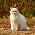 街歩いてたら見かけた「キティさんコラボ」がヤベェwww