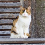 ゴハンの為なら猫ドアロックも粉砕するド根性キャット😾