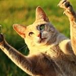 これは予測不能w 猫さんの意表をついた攻撃がカワイイ😼