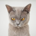 出勤途中に近所の猫撮ったら「バリア展開」されたわ😂