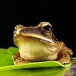 【悲報】パペットマペットのカエルくん、宇宙と一体化するwww