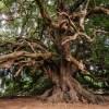 12年前に埼玉の山奥で見つけた「木と一体化しかけている看板」を久々に見に行ったら…😳