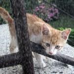 大雨に晒された野良猫が可哀想だったので家に入れてあげた結果…😸