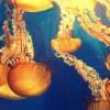 """「チャレンジャーすぎるだろw」…ある水族館のクラゲ担当飼育員による""""体験談""""が恐ろしい😨"""