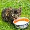【動画】猫がすごい勢いでミルクを要求してきたので注いであげたら…😹
