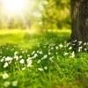 【号泣】父が亡くなって初めての春、父が「春菊」を作っていた屋上に4ヶ月ぶりに上がってみたら…😳