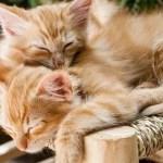 """いったい何匹いるんだ…あまりにも""""密""""な猫さんたちの至福な光景😻"""