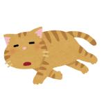 ある漫画家が飼っている猫の寝顔が…もはや現代アート😹