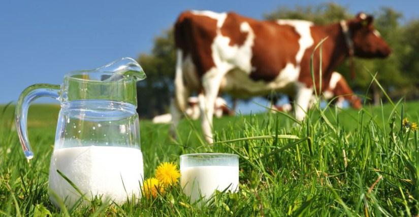 Susu Formula Berbahan Susu Sapi