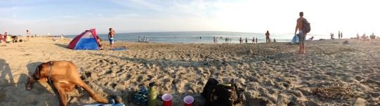 ... Seabright Beach & my Ridgeback (on the left, hunting seaweed flies).
