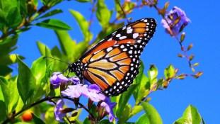 BUTTERFLY BOOK NOOK: Pollinator & Storytime Garden