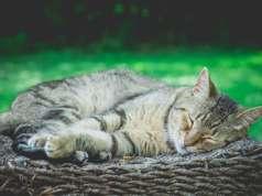 bahçede uyuyan kedi