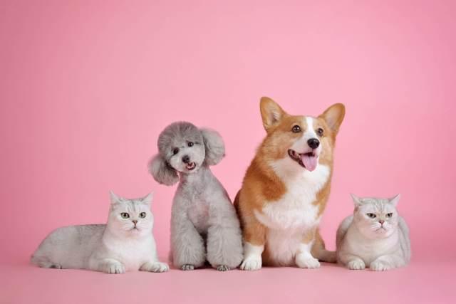 kedi ve köpek grubu