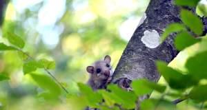 ağacın dalındaki ağaç yediuyurunun resmi