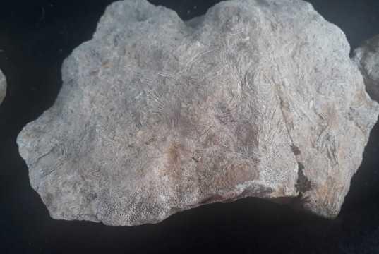 Gabar Dağı'nda bulunan 45 milyon yıllık fosil
