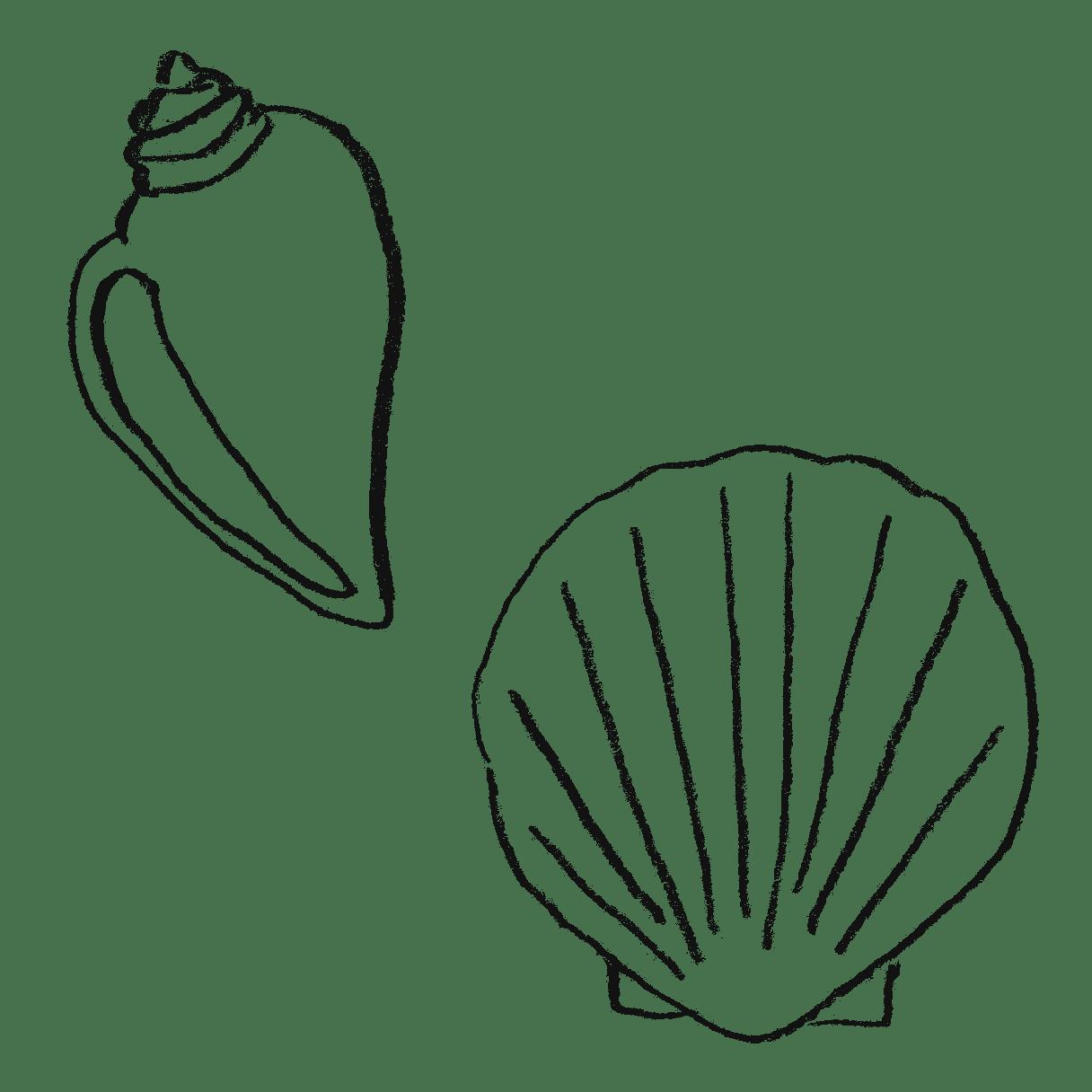 貝殻のイラストフリー素材