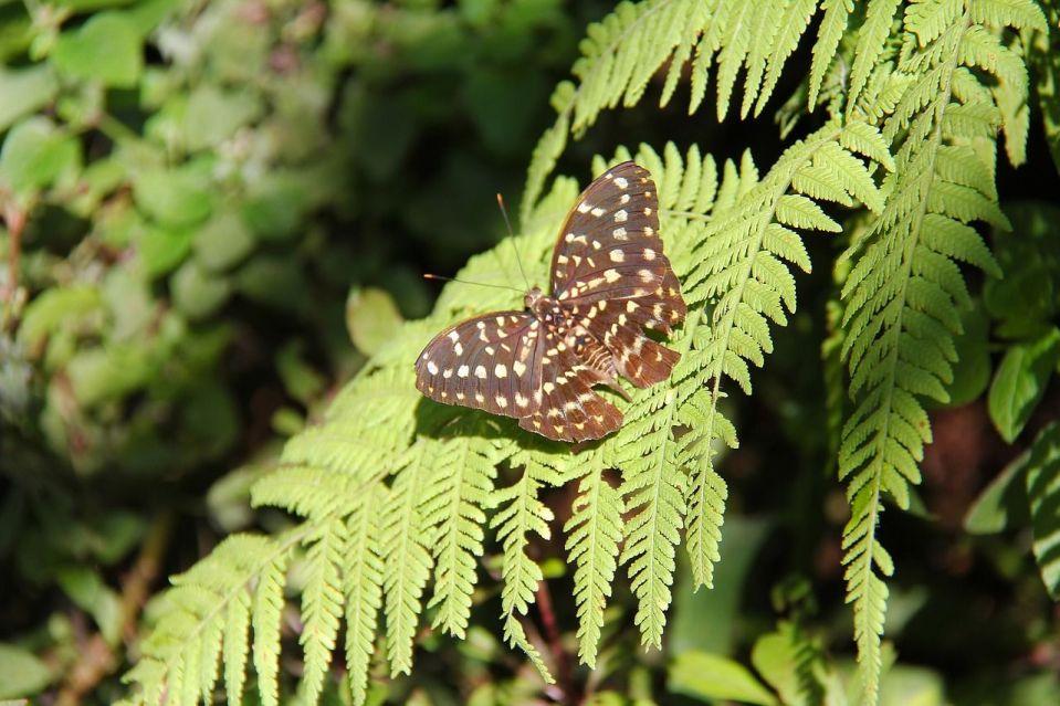 indispensables laos papillon nature flore