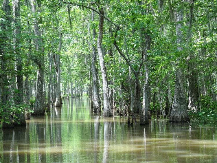 lousiane-nature-eau-marécage-bayou-destination-bucket-list