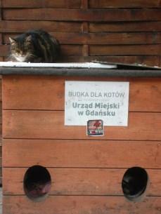 Tras el orificio de la derecha duerme otro gato, de mirada antipática. No parecen muy amigables estos gatos callejeros.