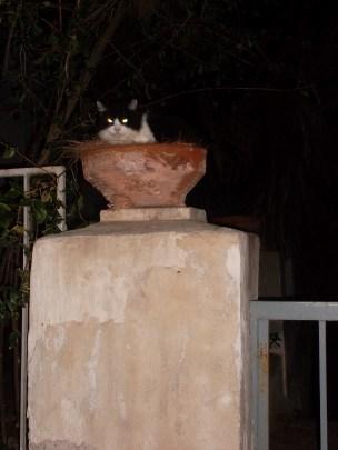 En su trono